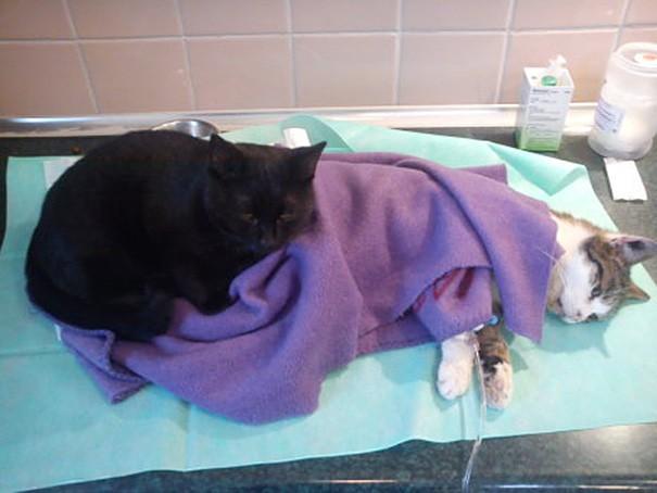 Radamanes barınağa ilk getirildiğinde solunum enfeksiyonuna sahip ve nefes almakta zorlanan bir kediymiş