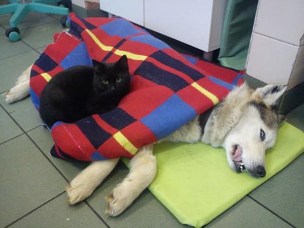 Ama veterinerler Radamanes'te hala yaşam belirtileri olduğunu farkedince bu kararlarından vazgeçmişler
