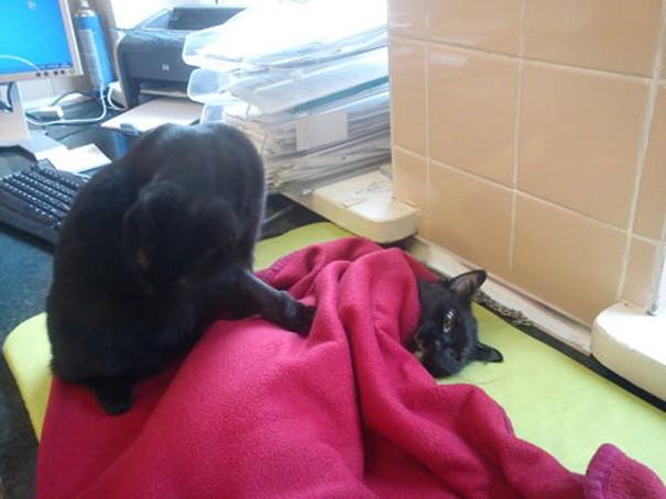 Özellikle ciddi ameliyatlar geçiren kedi ya da köpeklerin başından bir saniye bile ayrılmıyor artık Radamanes