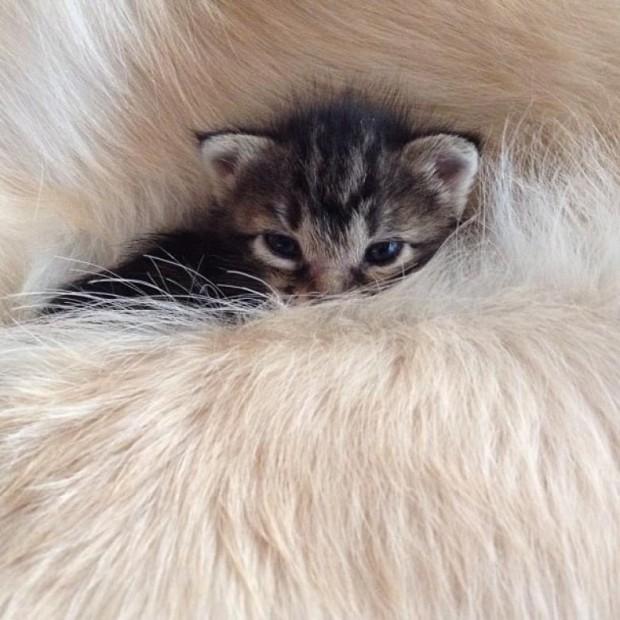 Kaybolmuş ve yalnız kedi Ichimi'nin bir aileye ihtiyacı vardı.
