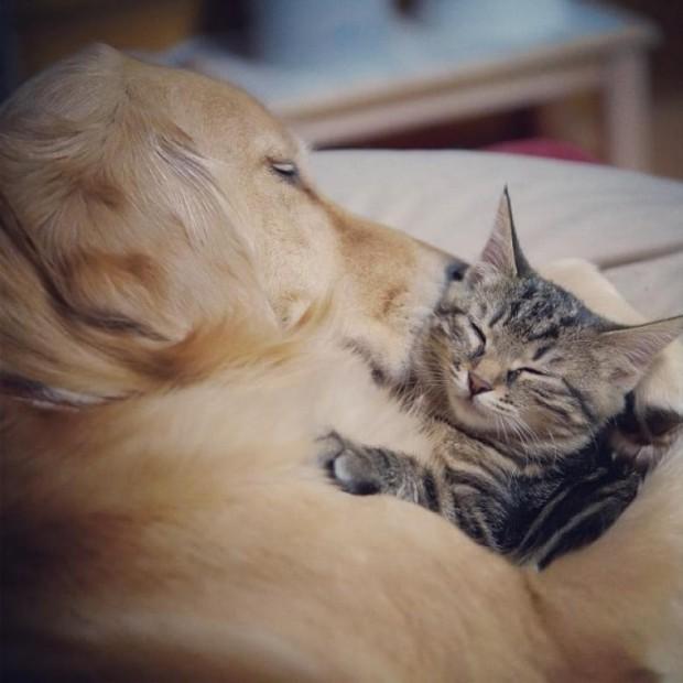 Bu sevgi dolu ailenin Ponzu isminde Golden Retriever cinsi bir köpeği vardı.