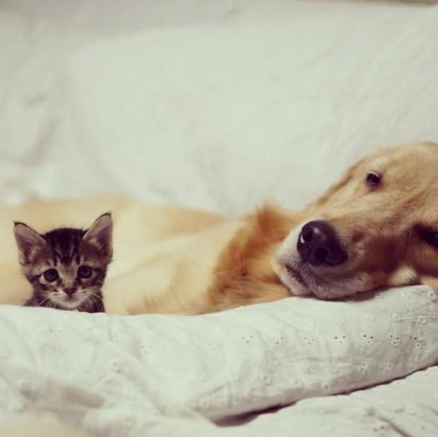 Ponzu, tüm sevimliliğiyle terkedilmiş kediyi evine kabul etti ve sahiplendi.