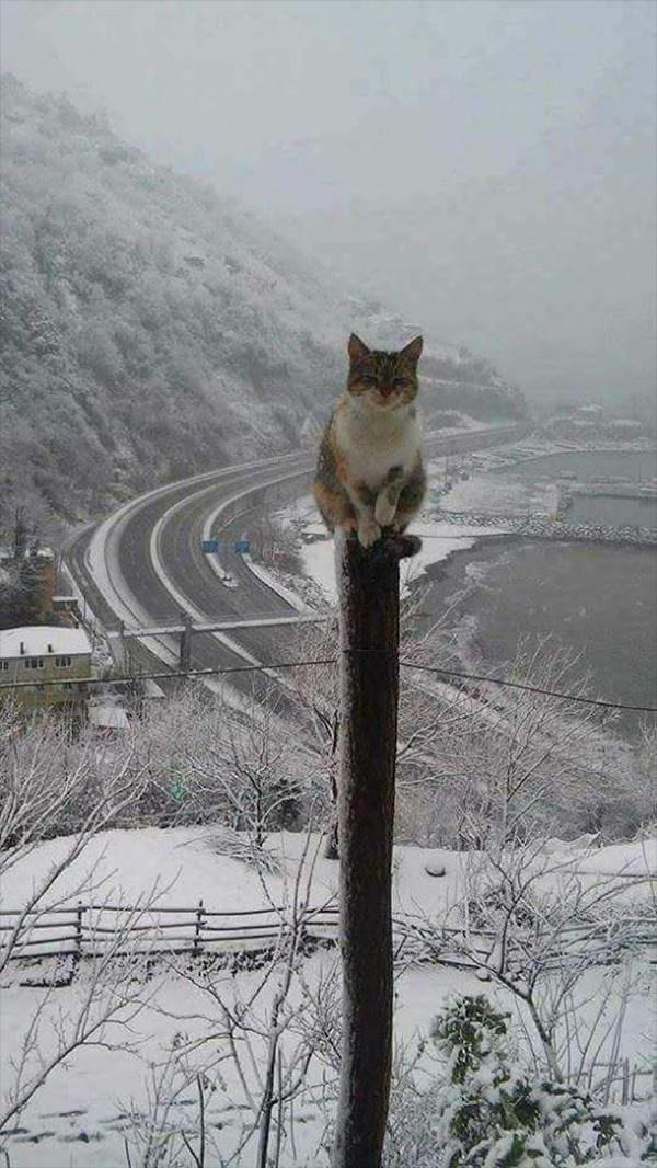 1 . Yahu yola çıktığım zaman yazdı ne zaman yağdı bu kar?