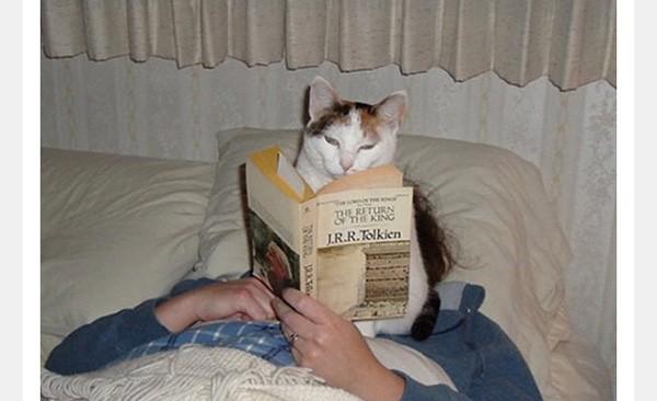 9 . Uyumadan önce mutlaka kitap okumalı