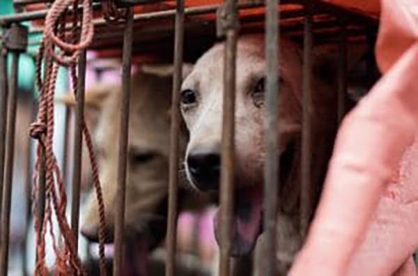 1 .Tayvan kedi köpek yenmesini yasaklayan ilk Asya Ülkesi oldu.