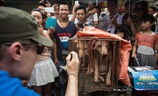 3. Yasa aynı zamanda kedi ve köpeklerin satışını ve daha önce kesilmiş ama depolanmış etlerin bulundurulmasını da kapsıyor.