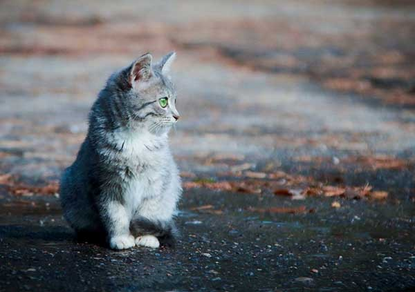 Sokak hayvanlarını seven insanların karakterini öğrenmek için ileri tuşuna basabilirsiniz.