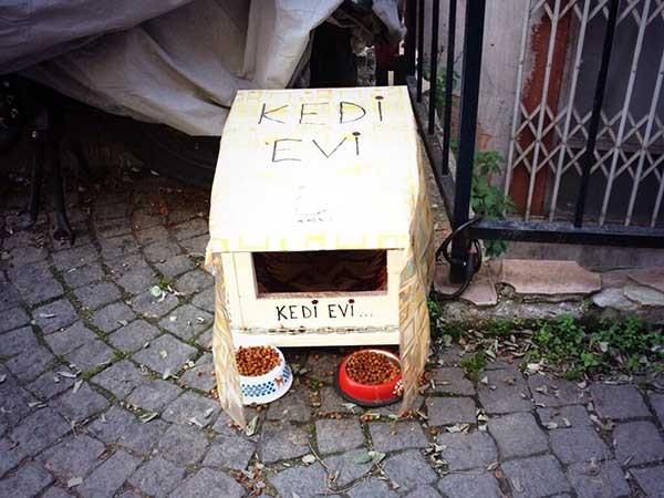 1 . Vicdanlıdırlar, sokak hayvanları için korunak yaparlar.