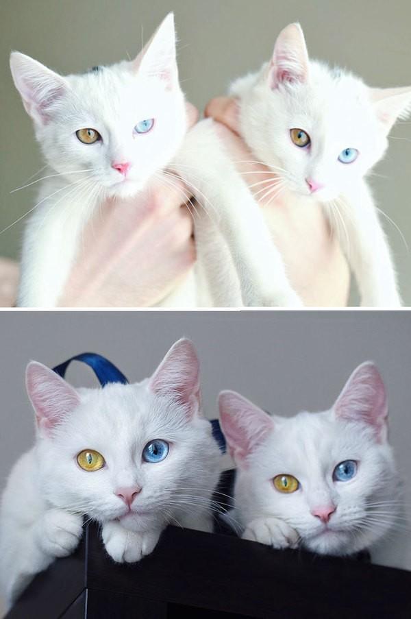 4- Iris ve Abyss, ikiz kardeşler