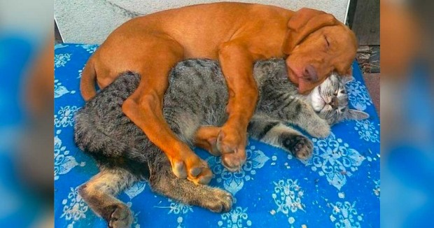 İşte kanıtı niteliğindeki 6 kedi ve köpek: