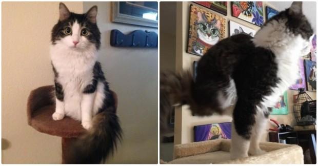 İleri tuşuna basarak iki bacağı olmayan kedi Anakin 'in fotoğraflarını görebilirsiniz.