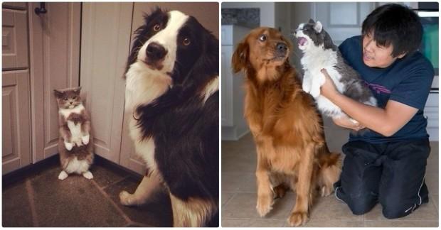İleri tuşuna basarak aynı evi paylaşmaktan hoşnut olmayan kedi ve köpeklerin fotoğraflarını görebilirsiniz.