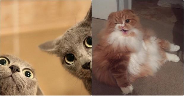 Kedilerin bizi sahiplendiğinin kanıtı olan fotoğraflarını görmek için ileri tuşuna basabilirsiniz.