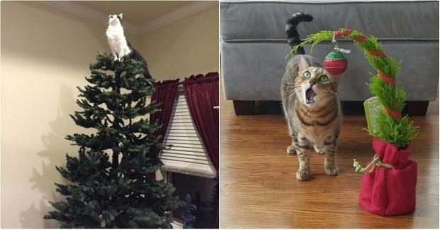 Yılbaşı ağacıyla ilk kez tanışan kedilerin fotoğraflarını görmek için ileri tuşuna basabilirsiniz.