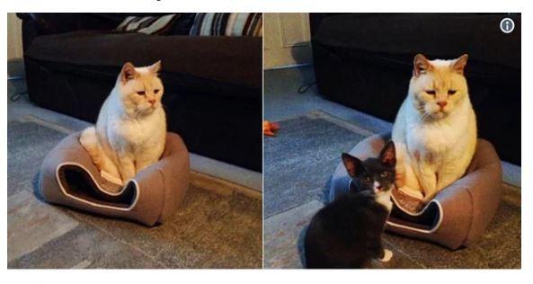 1 . Tombul kedi evine sığamayınca kızmış evini ezmiş.