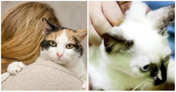 Kedi ensesinden neden tutulmamalı öğrenmek için ileri tuşuna basabilirsiniz.