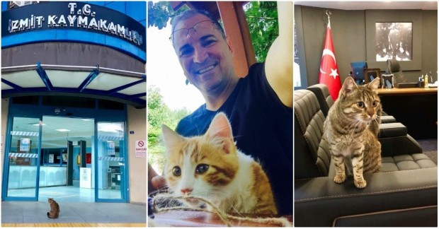 Hayvansever kaymakam Ersin Emiroğlu 'nun haberini okumak için ileri tuşuna basabilirsiniz.