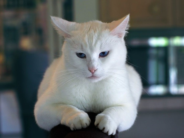12 . Ve bir kız kedi isen : Bu masum güzellik gibi görünürdün.