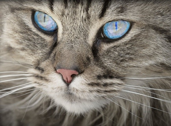 18 . Ve bir kız kedi isen : Bu güzel gözlü gibi görünürsün.