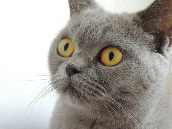 13 . Eğer çalar saati masadan aşağıya iten bir erkek kedi isen : Bu masum yakışıklı gibi görünürdün.
