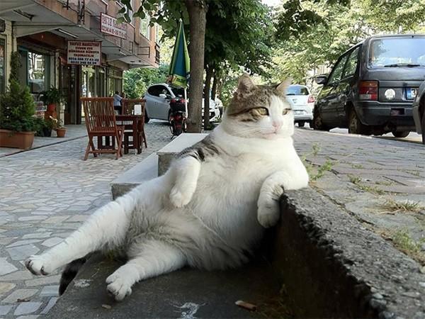 16 . Eğer çiçeği masadan aşağıya iten bir erkek kedi isen : Bu sefacı gibi olurdun.