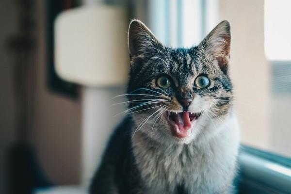 7 . Eğer kupayı masadan aşağıya iten bir erkek kedi isen : Bu şaşkın gibi görünürdün.