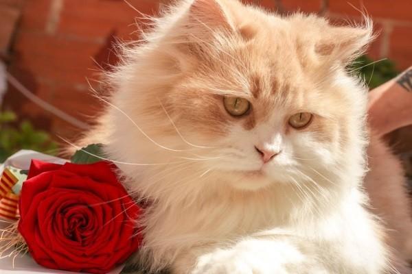 3 . Ve bir kız kedi isen : Bu hanımefendi gibi minnoş bir şey olurdun.