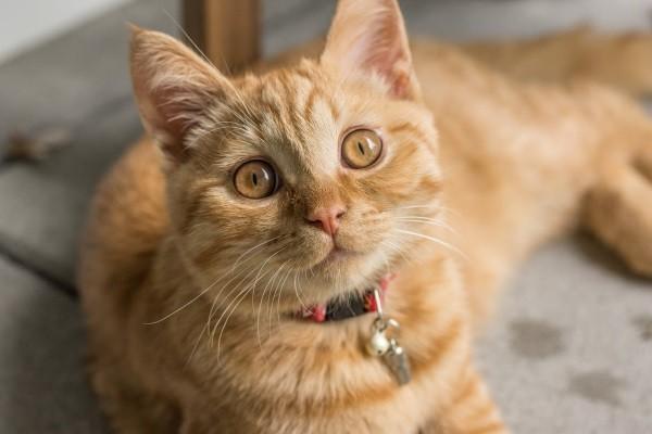 10 . Eğer kar küresini masadan aşağıya iten bir erkek kedi isen : Bu şapşik prens gibi görünürdün.