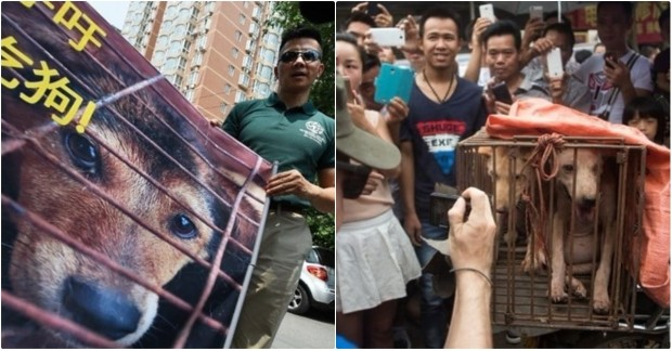 Tayvan 'da ki hayvan yasasını okumak için ileri tuşuna basınız.