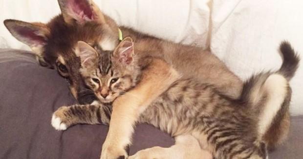 Birlikte uyuyorlar…