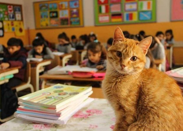 Tombi sınıfta ders dinliyor.