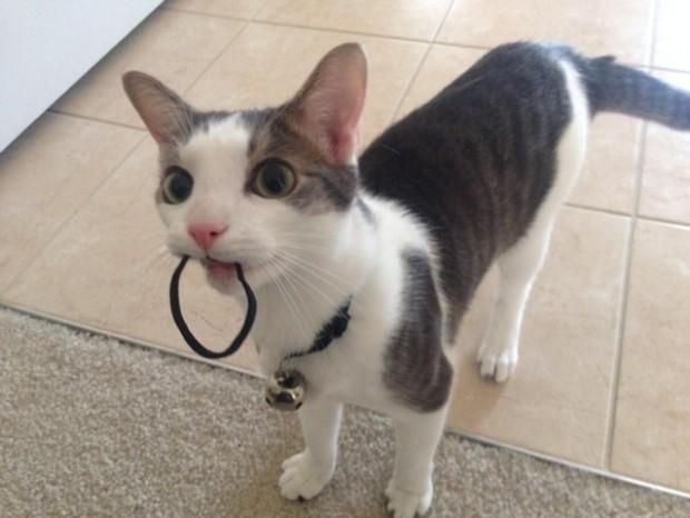 Lastik toka taşıyan bu kedi