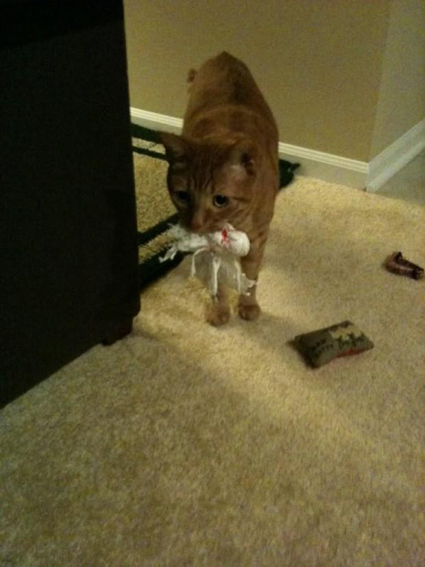 Oyuncağını taşıyan bu kedi