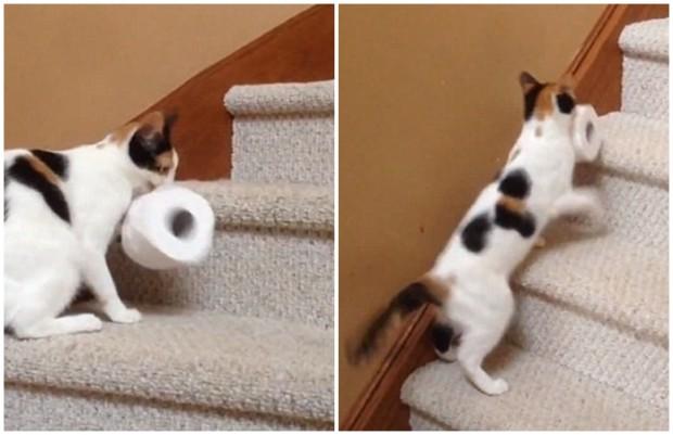 Yukarı tuvalet kağıdı çıkaran bu kedi