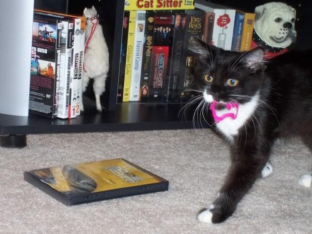 Lastik tokalara düşkün bir kedi