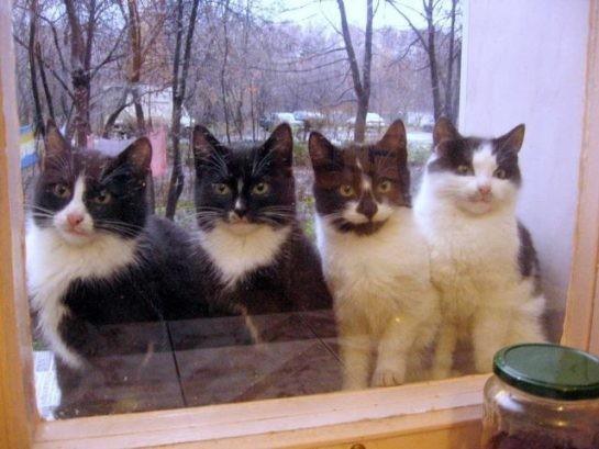 """Sokağınızdaki kedileri tanımak, beslemek: """"Bugün nasılsın bakalım?"""""""