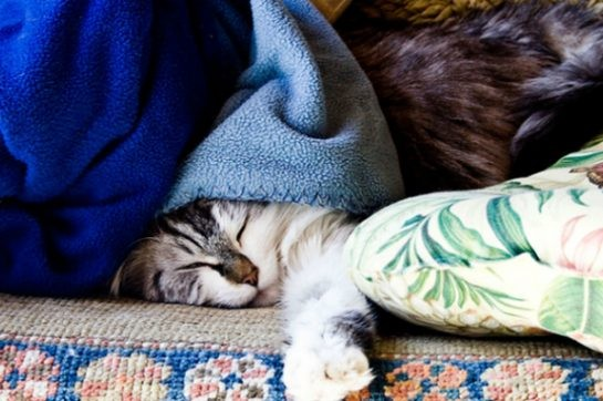 Kediciğiniz ufak bir rahatsızlık geçiriyor olsa bile tüm hayatınızın zindan olması