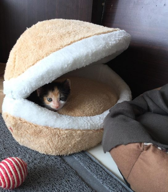 Sansa'ya uyuması için oldukça konforlu yataklar ve oynaması için çeşit çeşit oyuncaklar alındı.