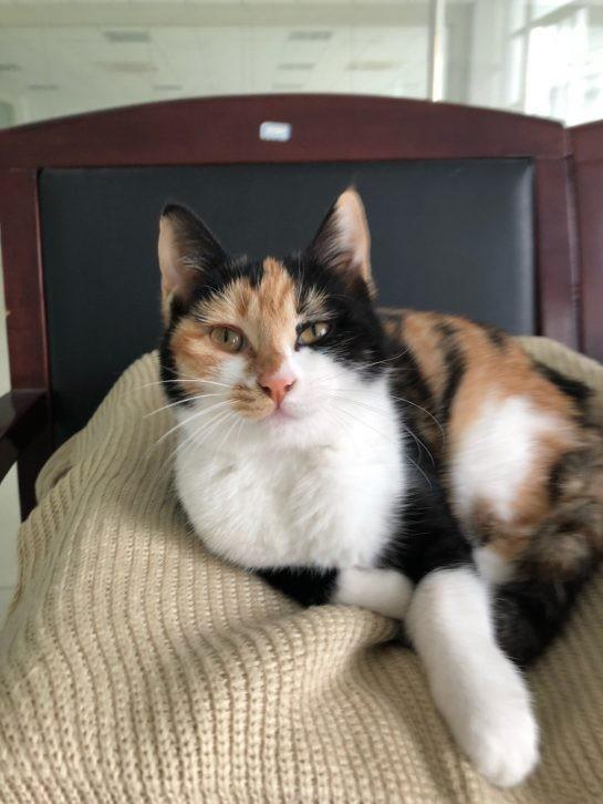 Şimdi nasıl kocaman ve büyüleyici bir kedi olduğuna bakın