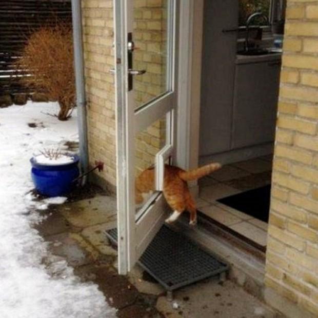 Kediler her zaman en uygun yolu bulurlar.