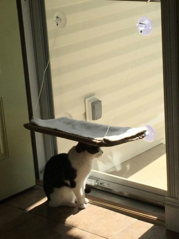 Kediler kendi bildiklerini okurlar. Çünkü onlar kendileri için neyin en iyi olduğunu bilirler.