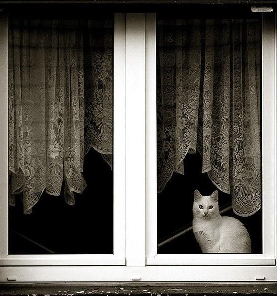 Tüm gün sabırla pencerede dikilirler, çünkü özlerler