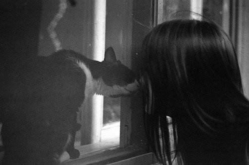 Evine karşı olan sevgin onunlayken daha da artar, çünkü evinin gözle görülebilen ruhu olurlar