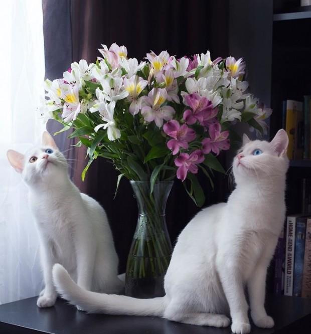 Çiçekler mi daha güzel, yoksa onlar mı?