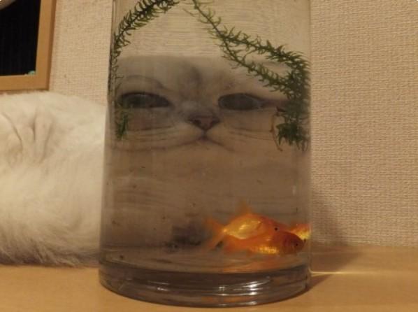 Balığın gazabına uğrayarak yanlışlıkla bir canavara dönüşen bu kedi