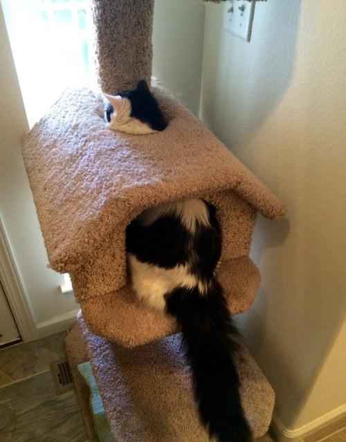 Kedi evini çok yanlış anlamış bu kafası karışık sevimli