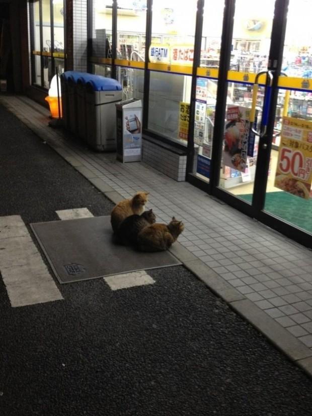 Muhtemelen biraz sonra bu marketi soyacak olan mama düşkünü kediler
