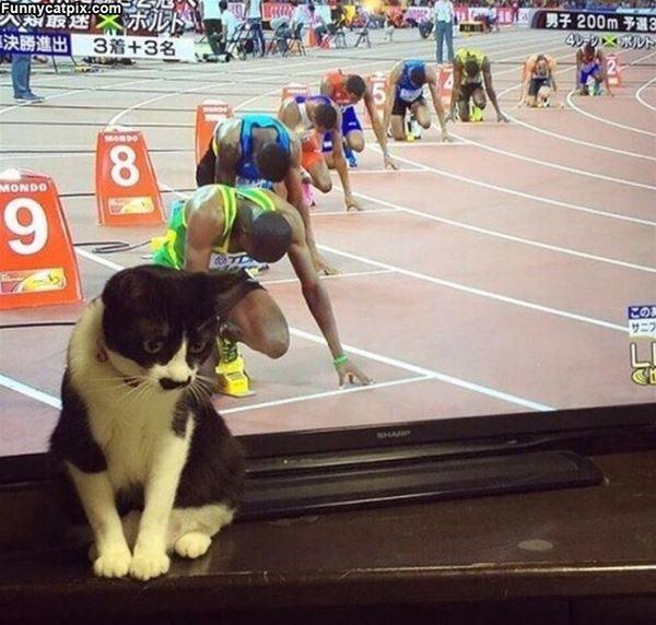 Yarışa arkasındaki koşucular kadar hazır olan bu kedi