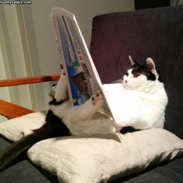 Kediler hakkındaki haberleri büyük bir dikkatle her sabah takip eden bu pati