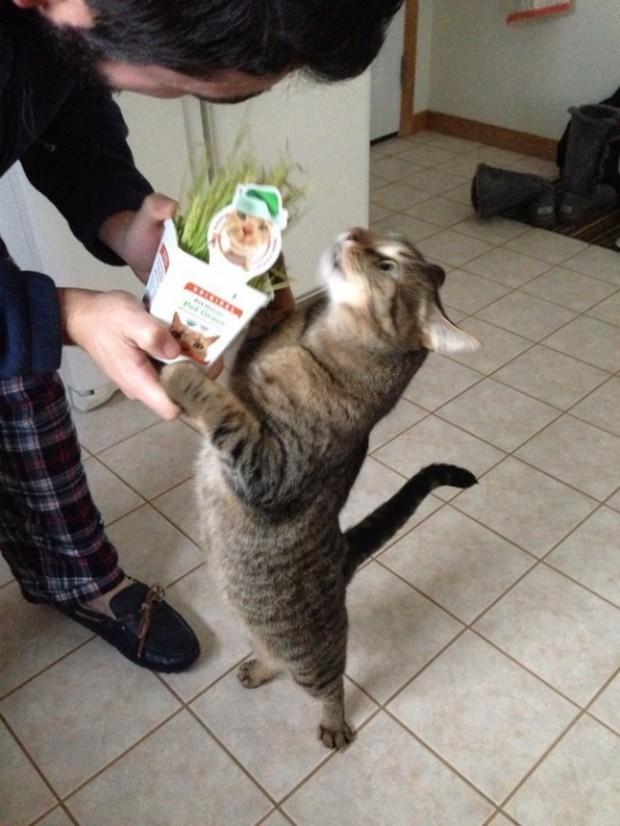 Kedi otunu alınca, Oscar'ı almış kadar sevinen bu kedi